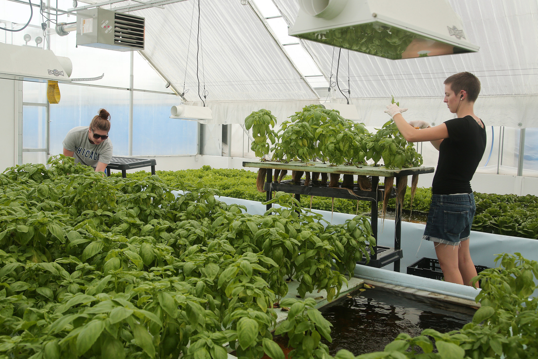 Next wave of ecopreneurs hopes to find key to making aquaponics next wave of ecopreneurs hopes to find key to making aquaponics profitable chicago tribune accmission Images