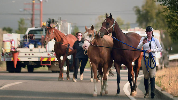 Horses are evacuated along Sand Canyon Road as the Sand fire approaches Santa Clarita. (Wally Skalij / Los Angeles Times)