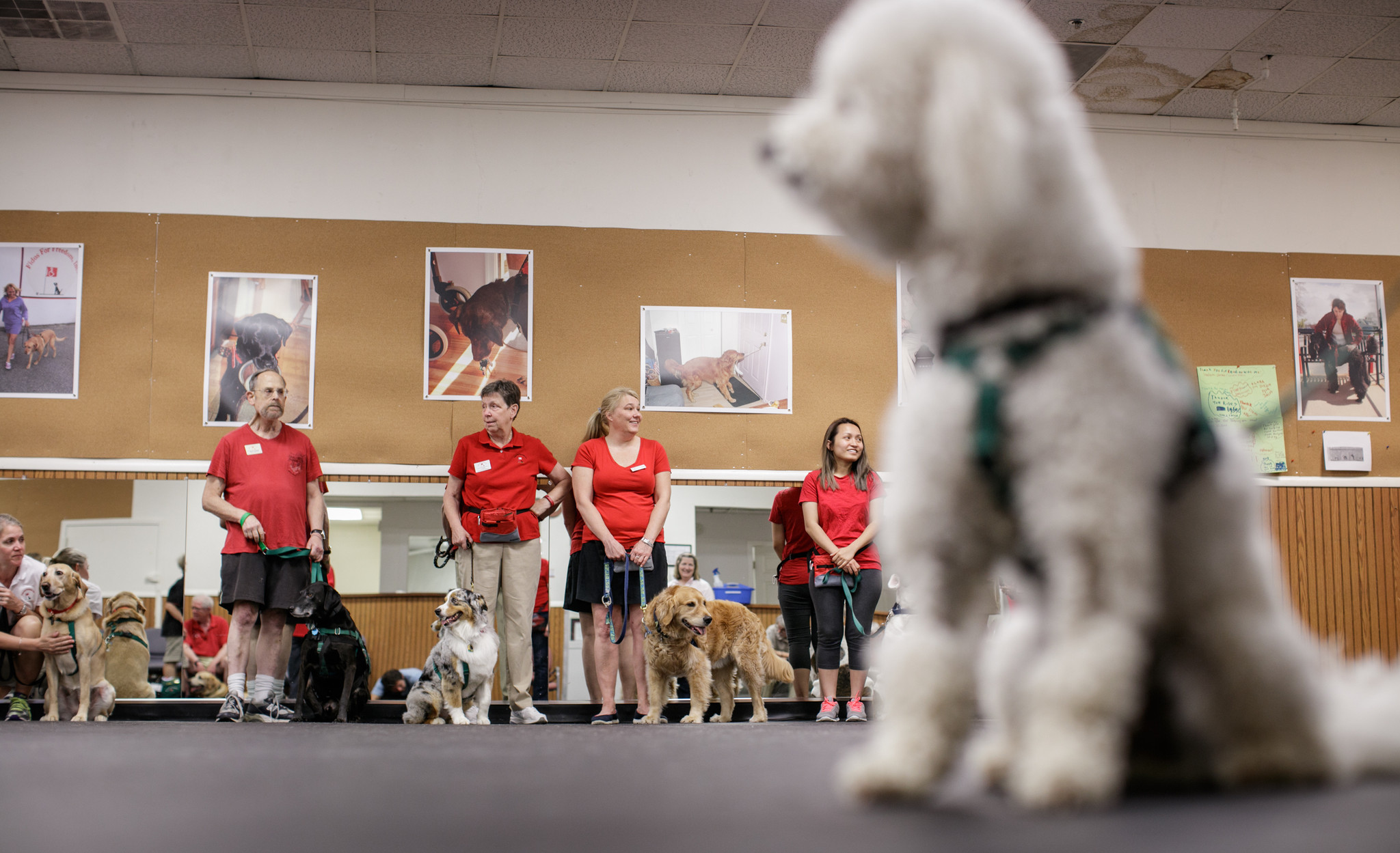What it takes to train a therapy dog howard county times xflitez Images