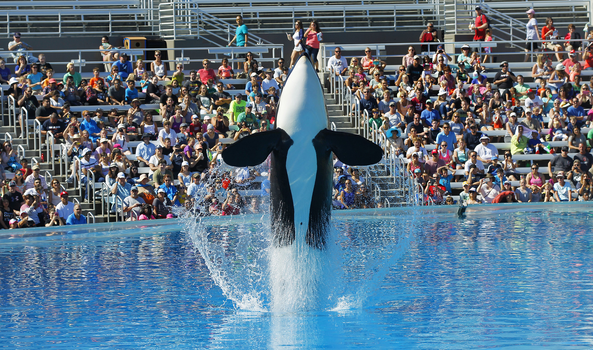 seaworld attendance drops sharply but ceo says san diego