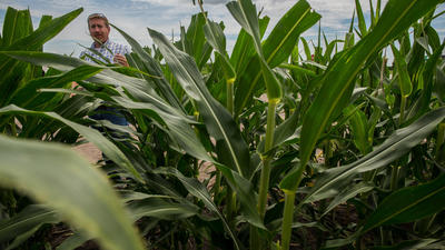 For migrant workers on Illinois farms, the job is hot, risky