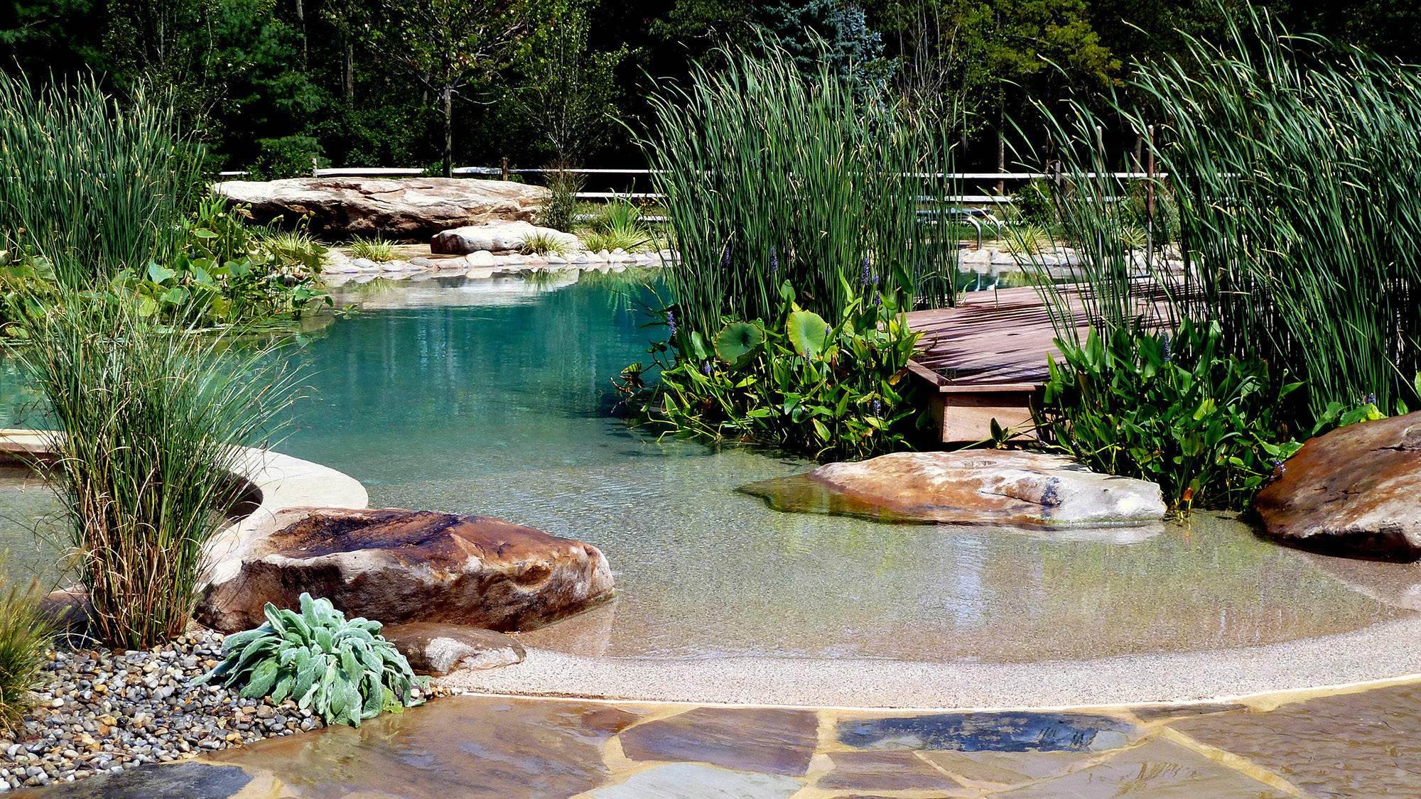 Locally quarried boulders, cattails, water lilies and American lotus enhance a natural swimming pool by BioNova Natural Pools.