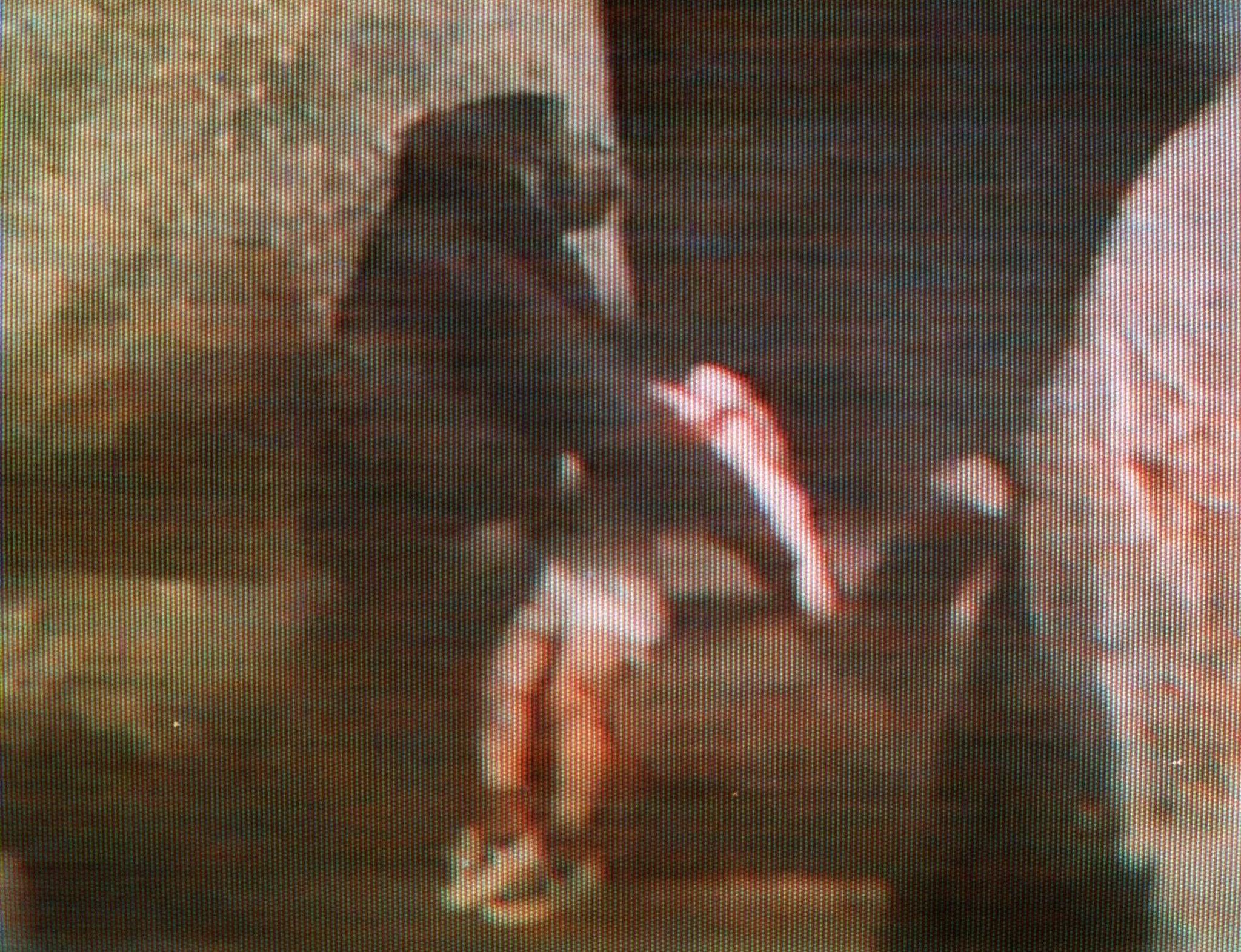 20 years ago today brookfield zoo gorilla helps boy who fell into