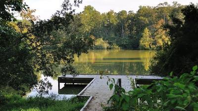 Harmful algae blooms in York River State Park, closes pond