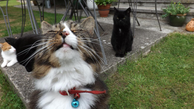 Close Encounters of the Furred Kind