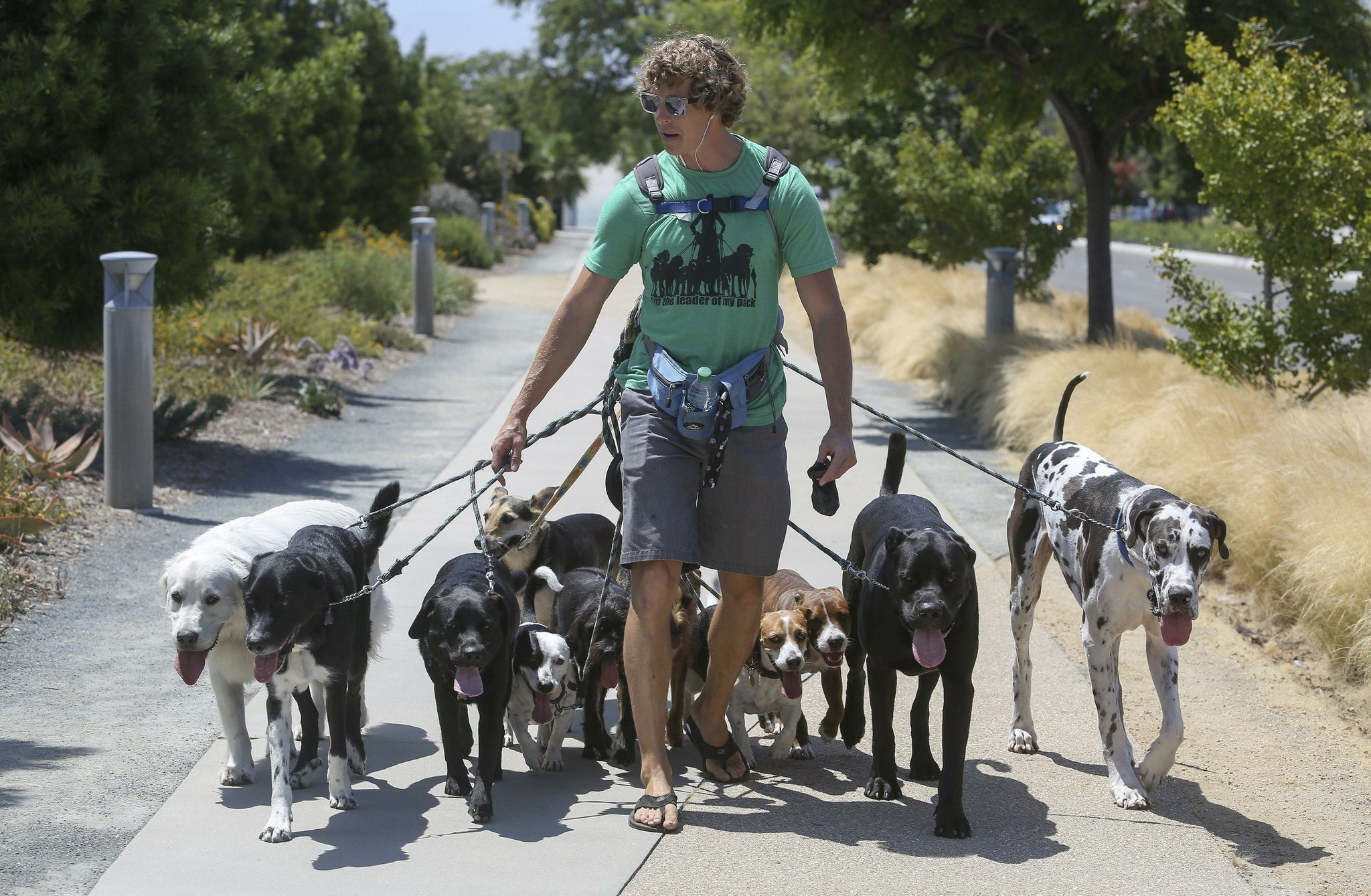 Pooches pampered with doggie day trips the san diego union tribune solutioingenieria Choice Image