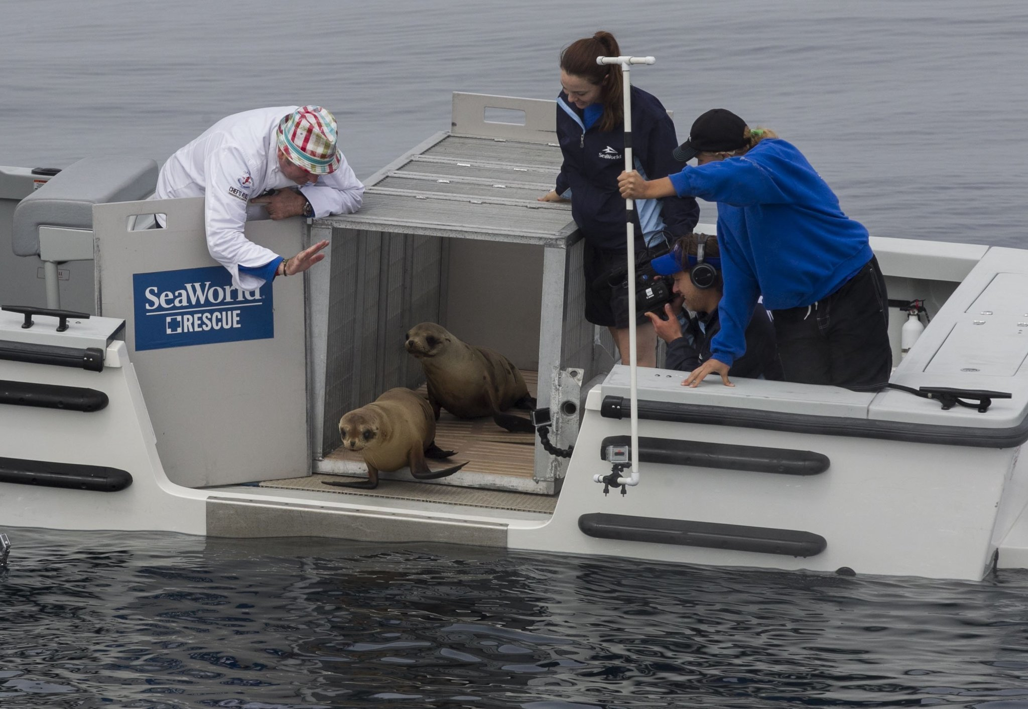 Sea lion pup rescued from Marine Room goes home - The San Diego ...