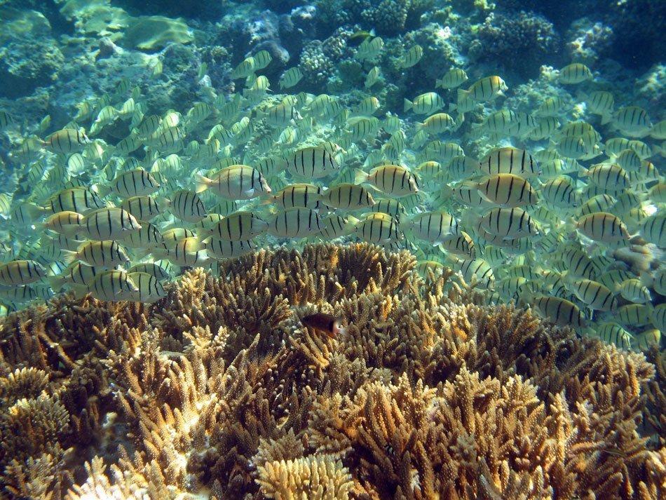 Remote reefs thrive despite climate change