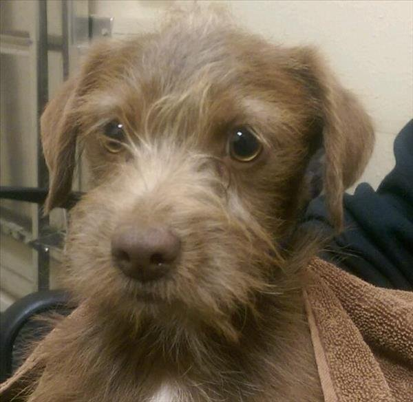 Adoption Centers For Dogs In San Diego