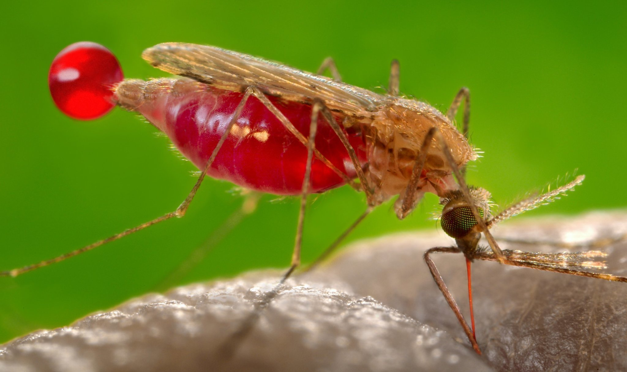 4 Kabupaten di Aceh Belum Bebas Malaria » DIALEKSIS    Dialetika dan ... 8408a07174