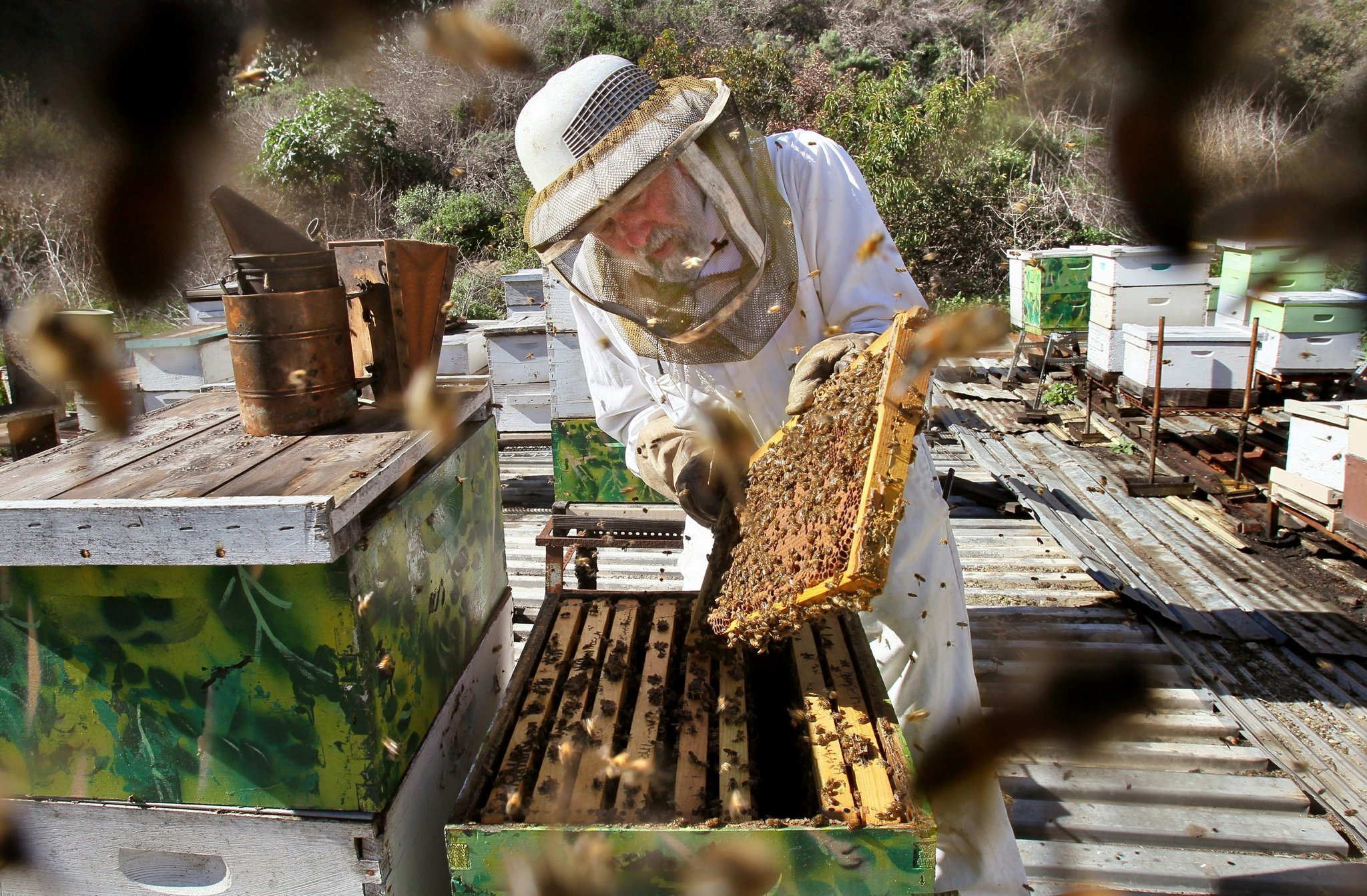 law allows swarm of new bee hives the san diego union tribune