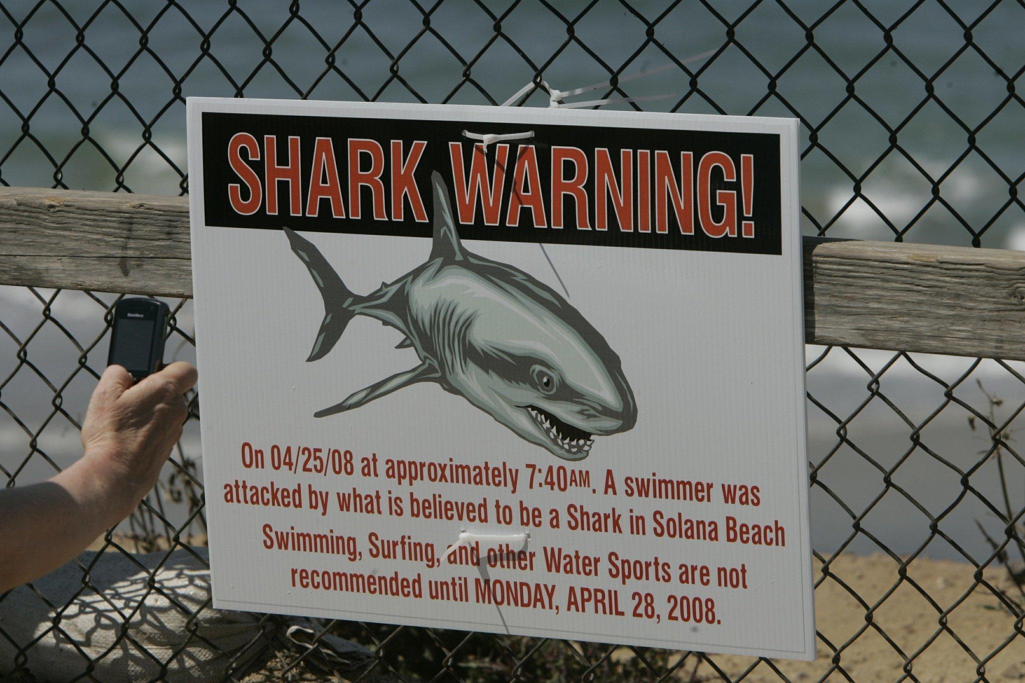 65 Years Of Shark Encounters In San Diego The San Diego Union Tribune