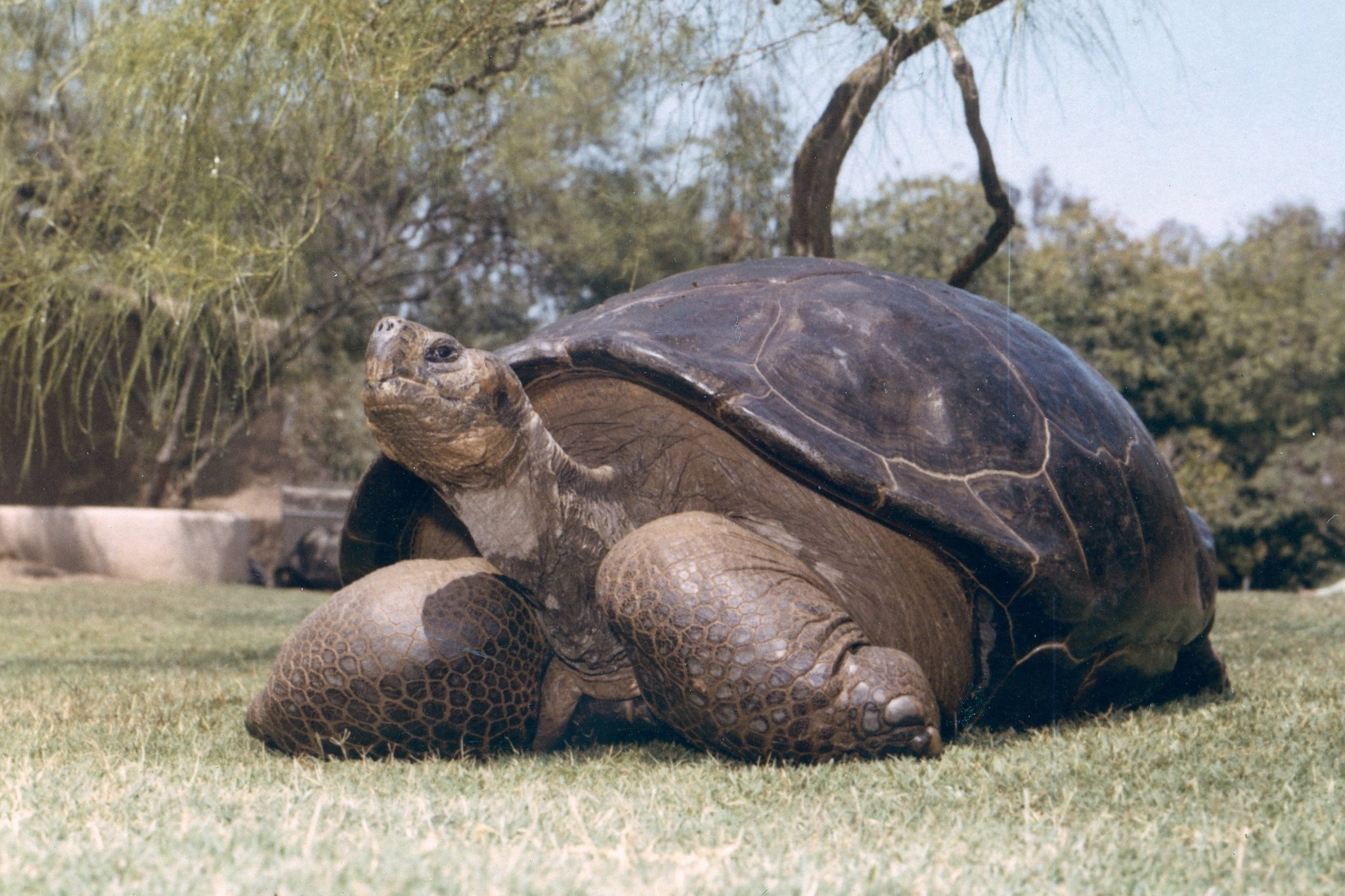 Legendary tortoise dies at san diego zoo the san diego union tribune publicscrutiny Choice Image