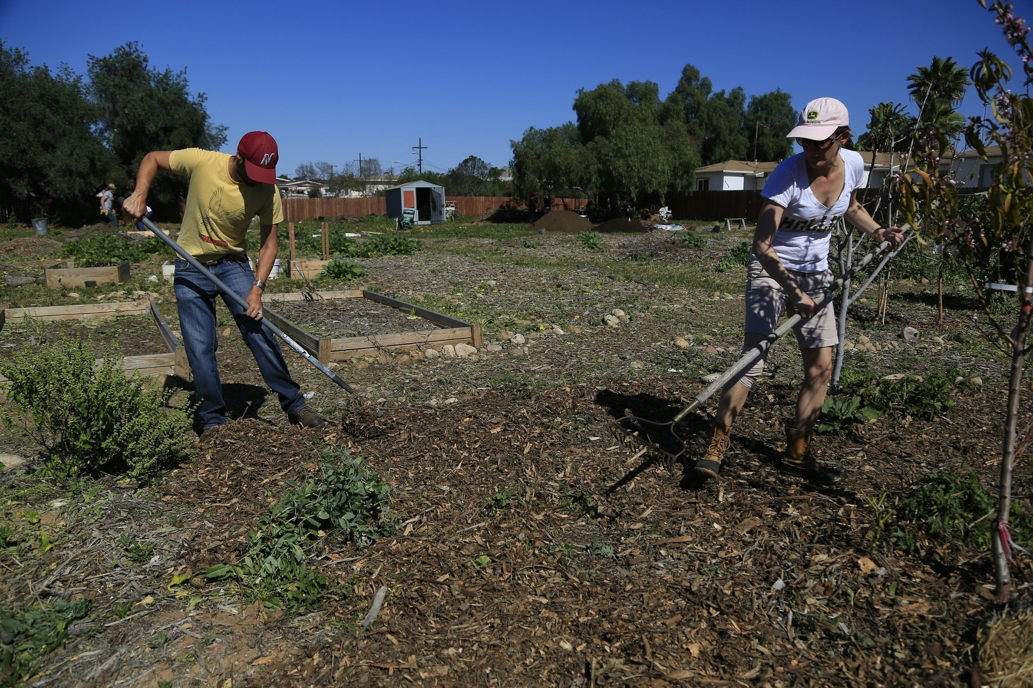 UCSD is studying community gardens as worldwide food source. - The ...