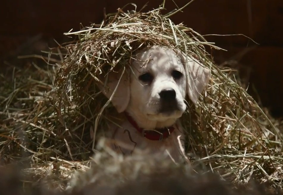Budweiser 1, GoDaddy 0 in Super Bowl of puppy ads