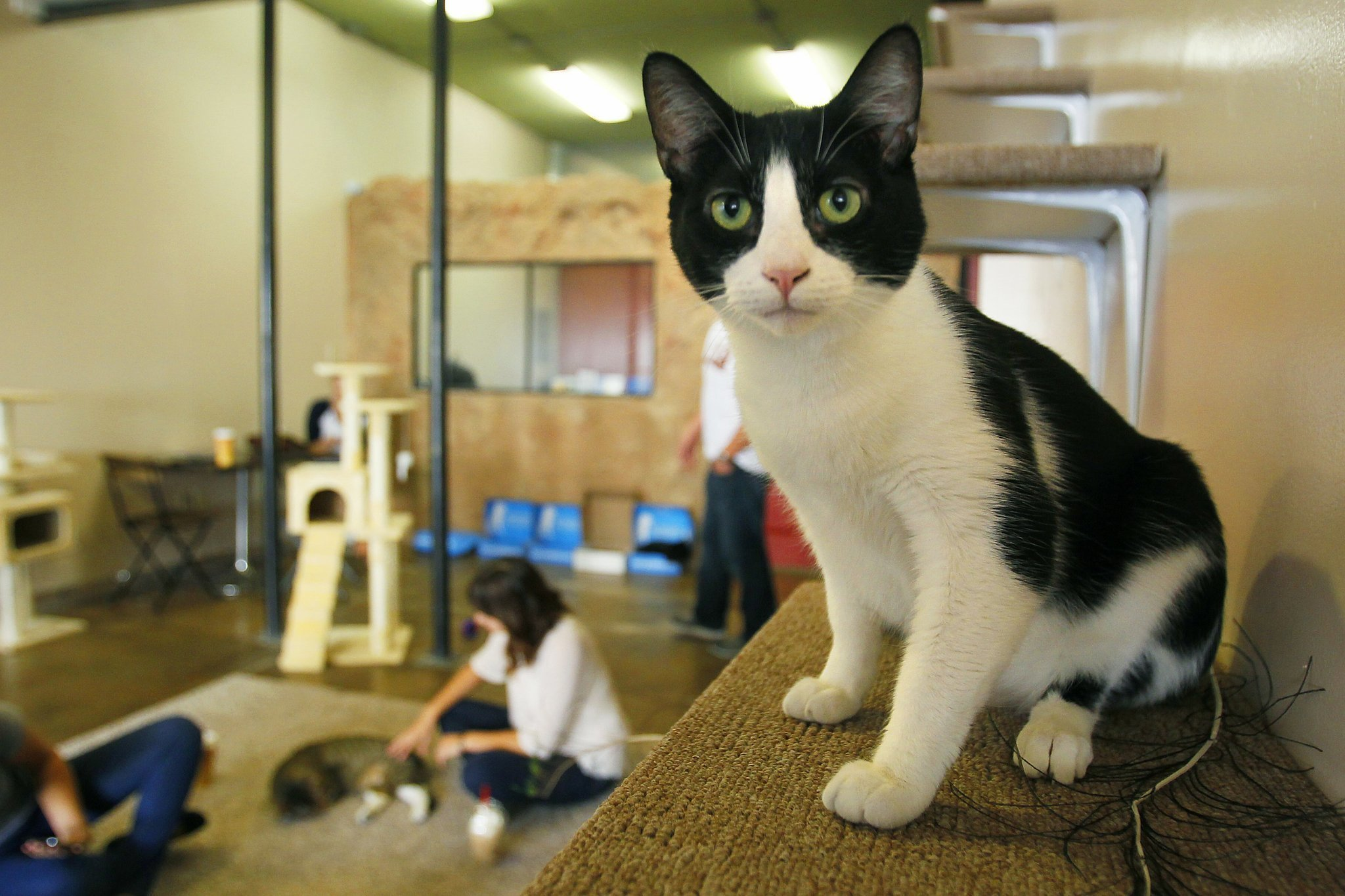 Cat Cafe San Diego Owner