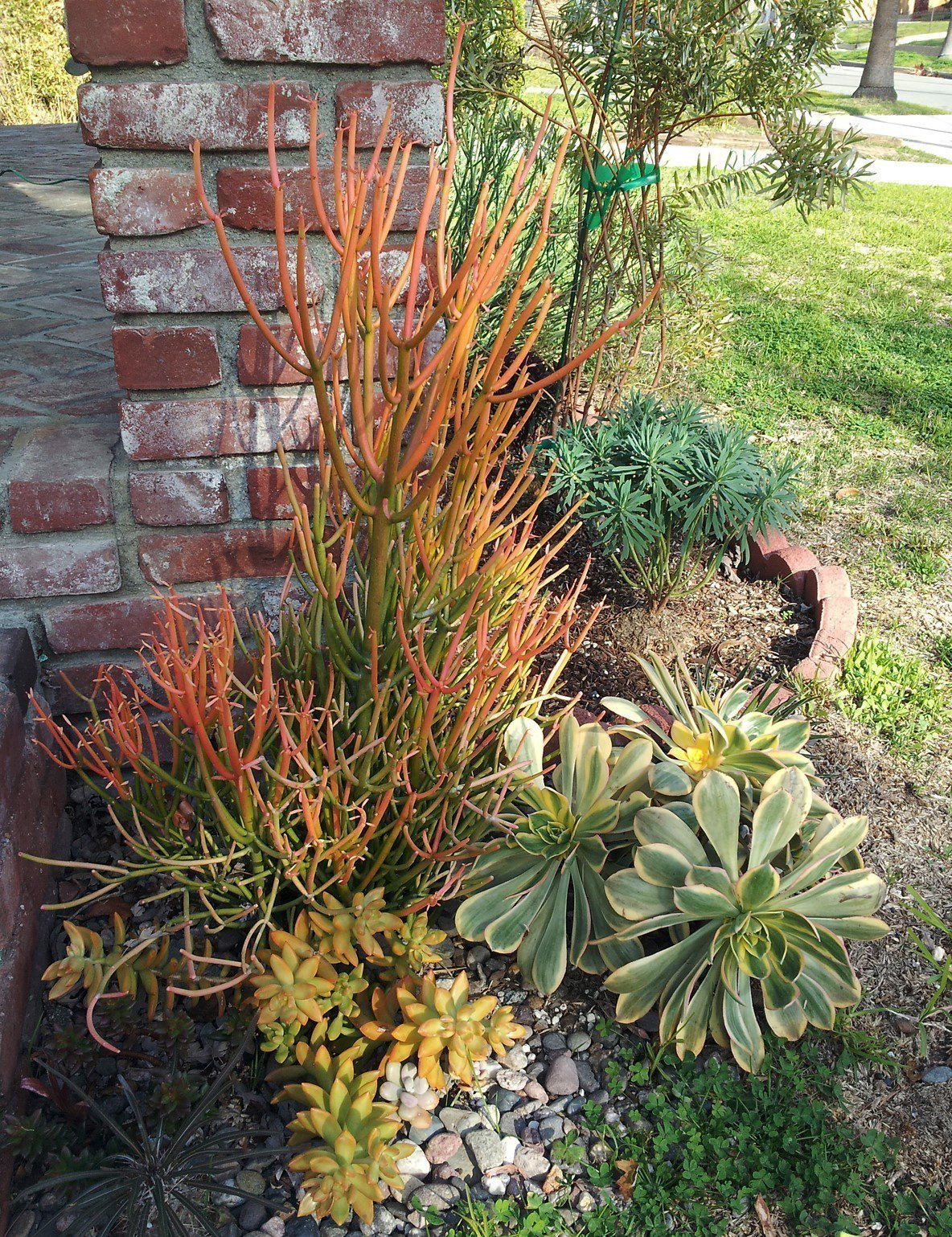 For love of succulents: tips for drought-tolerant gardening - The ...