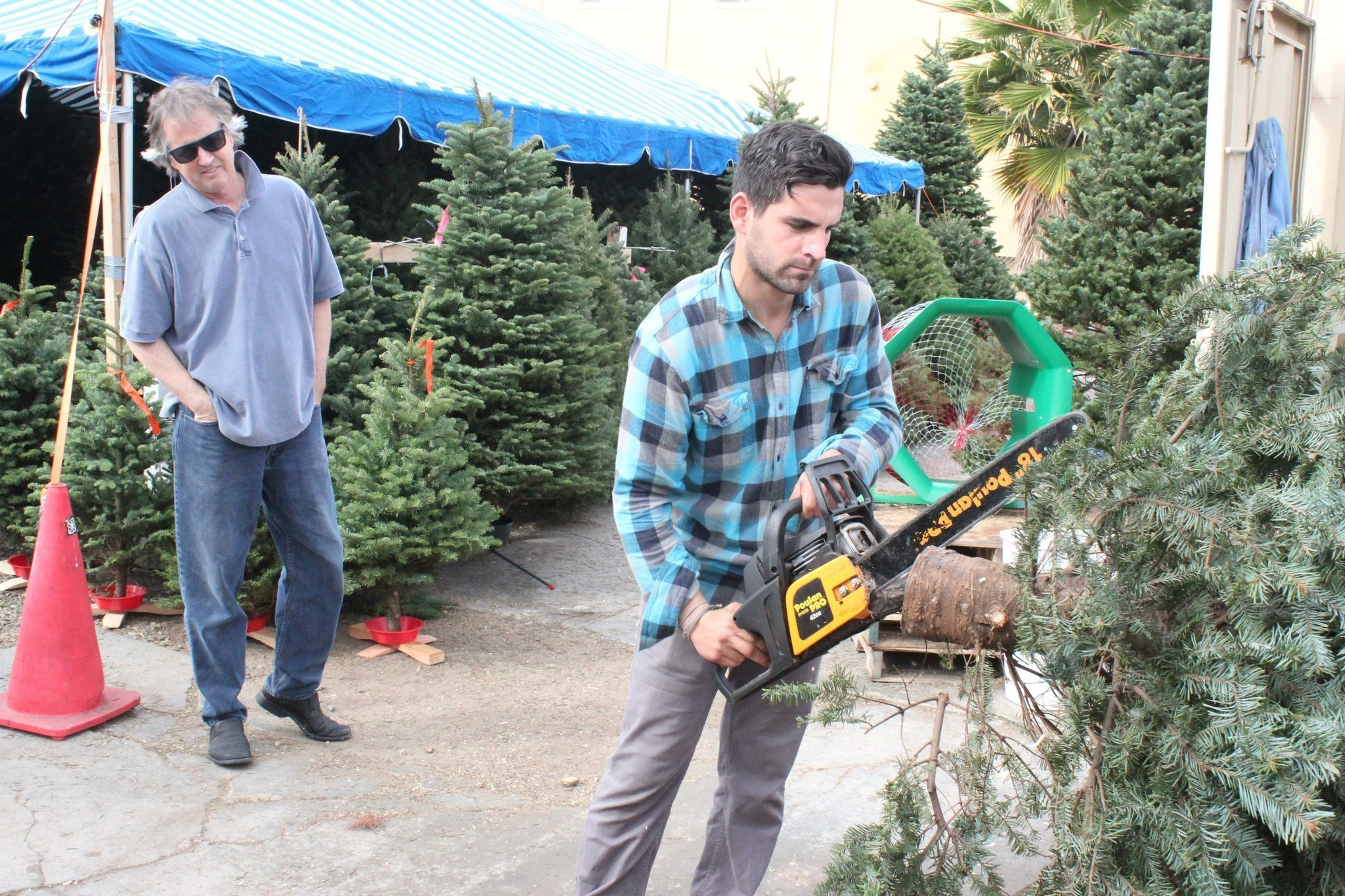 christmas tree buying in full swing at mr jingles la jolla light