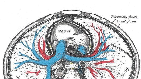 Body Parts: Pleural cavity maintains a vital vacuum - The San Diego ...