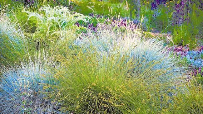 Garden Designer John Greenleeu0027s Love Affair With Grasses