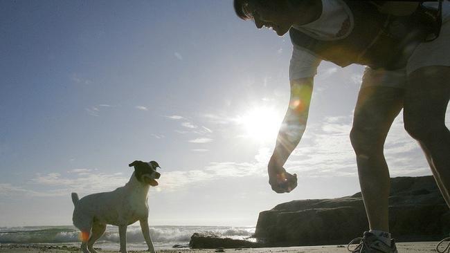 Let fido run wild run free on the sand the san diego union tribune let fido run wild run free on the sand solutioingenieria Choice Image