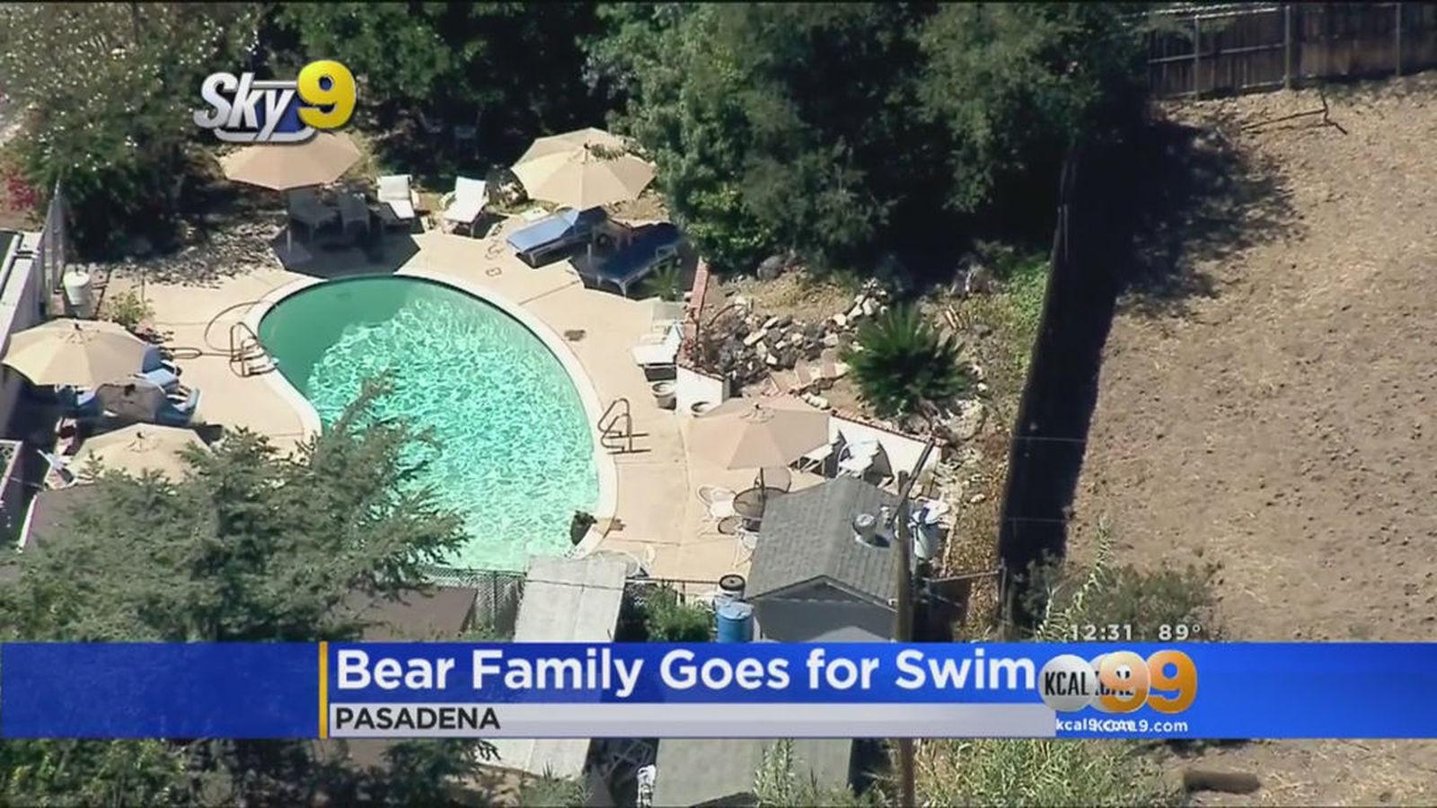 Bears Go Swimming At Pasadena Home La Times