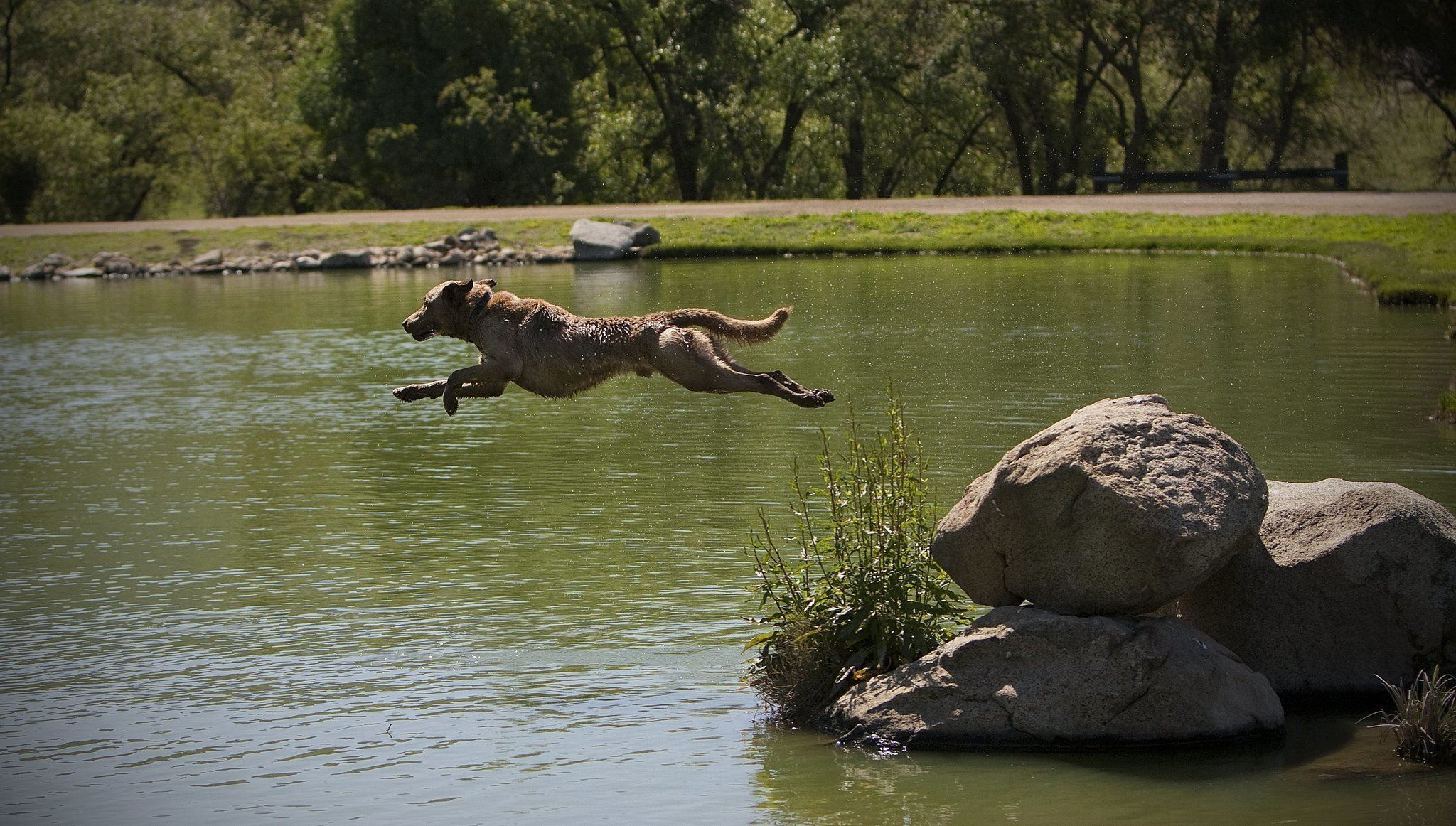 Dock Jumping Dog Eyes More Championships The San Diego