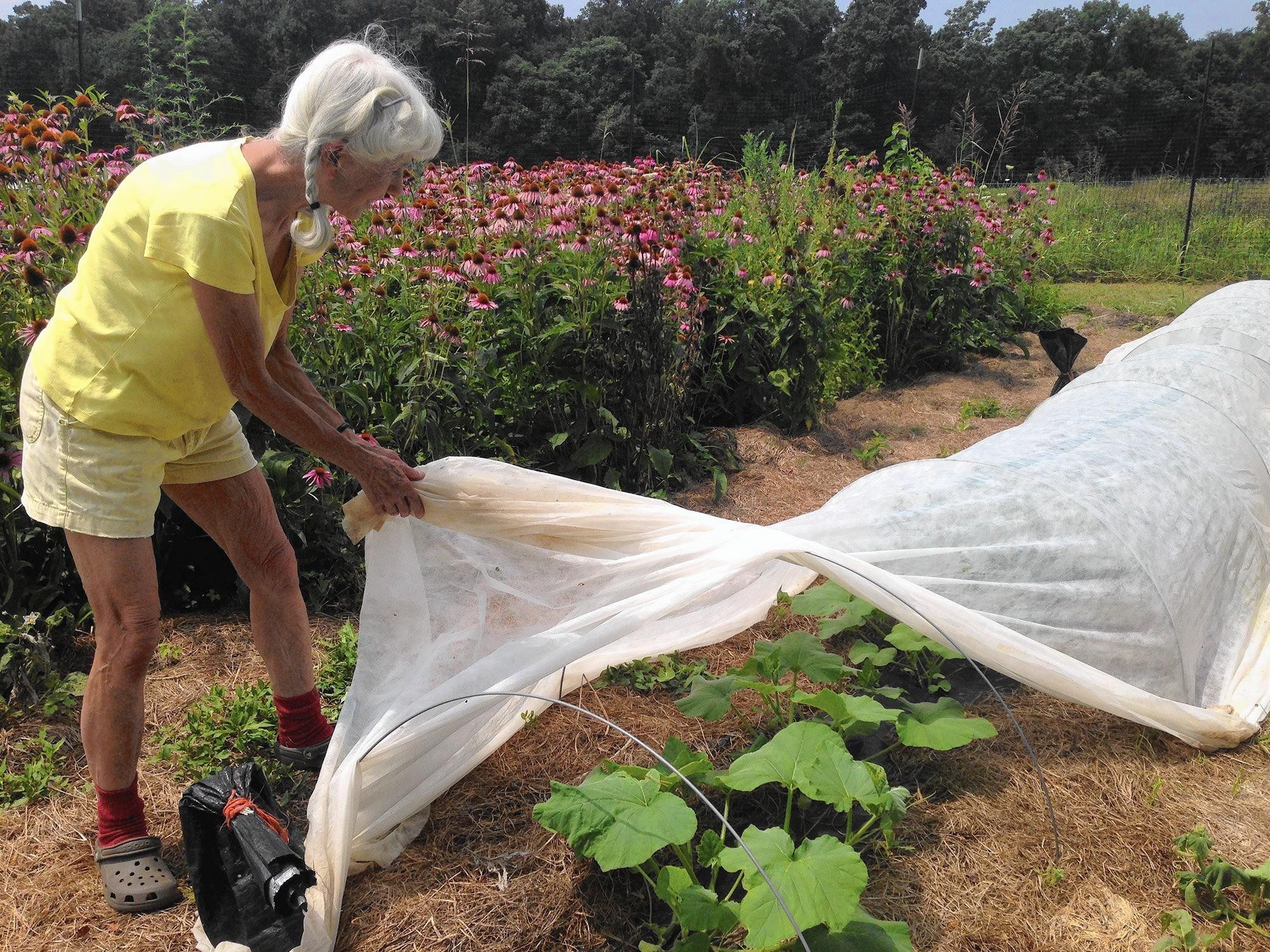 Gardening: Why Butternut Squash Plants Arenu0027t Producing Fruit