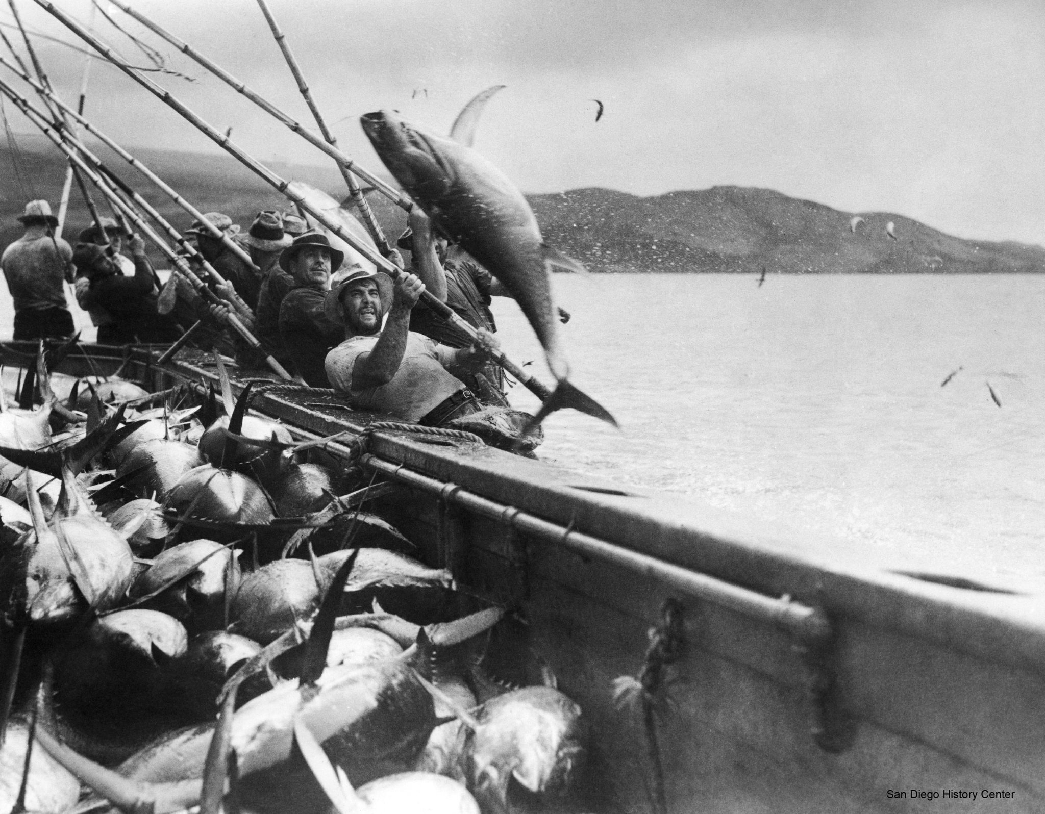 Tuna a san diego fish story the san diego union tribune for The history of fish