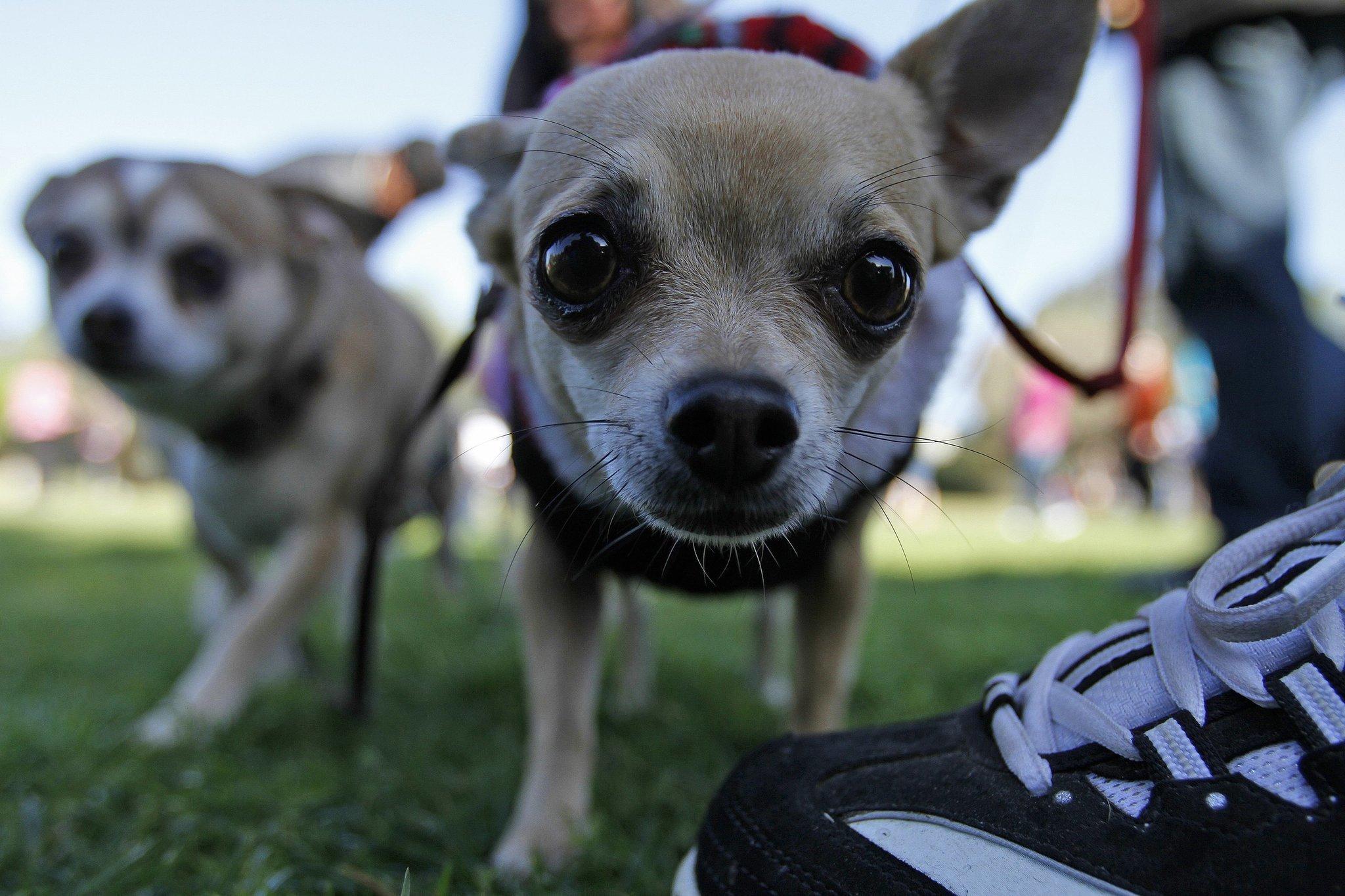 Kit Carson Park Dog Walk