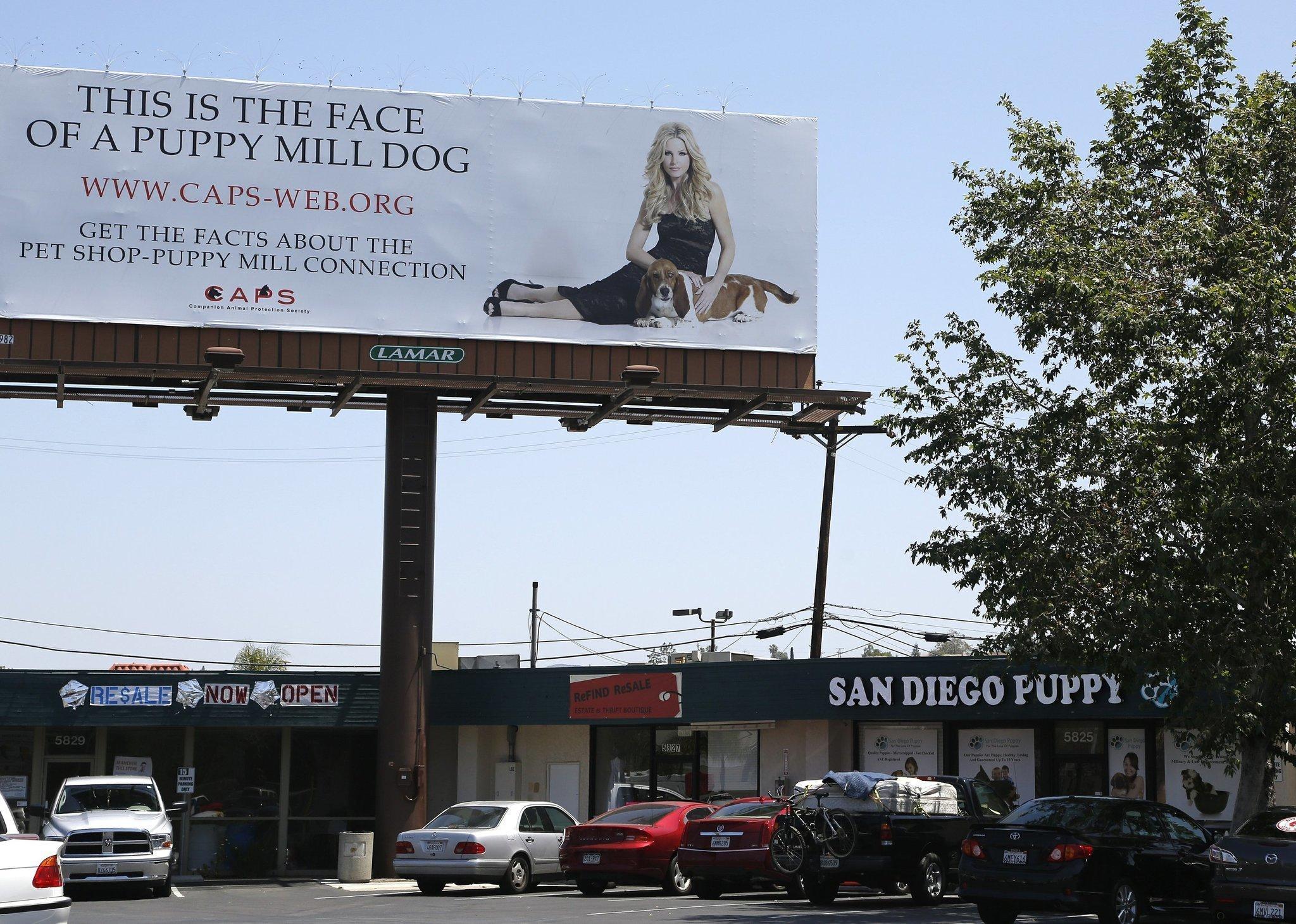 San Diego Union Tribune Dogs For Sale