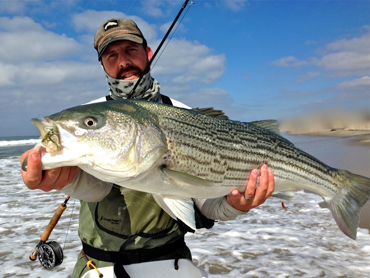 Vista fly fisherman lands striper of a lifetime off san for Fly fishing san diego