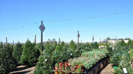 Family Christmas Tree Farm is one of four cut-your-own tree farms in