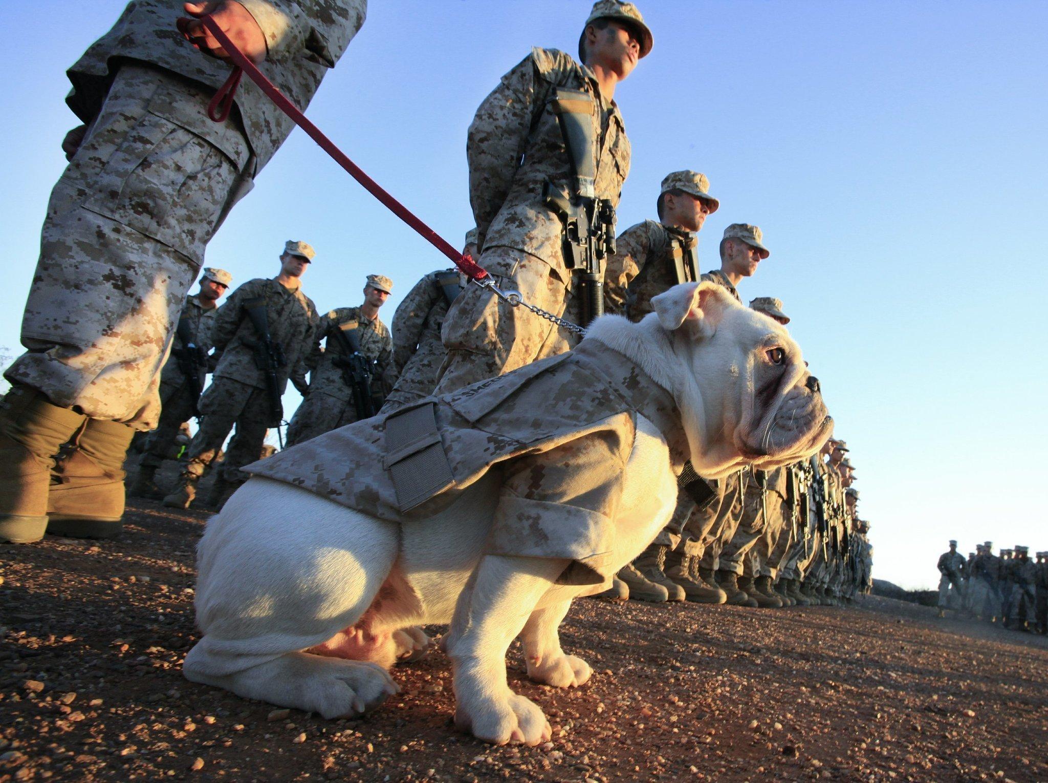 Bulldog mascot becomes Marine
