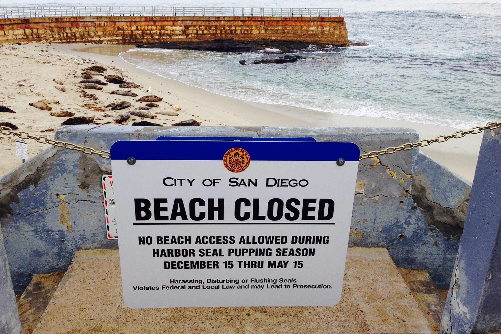 Seal Beach Ca News