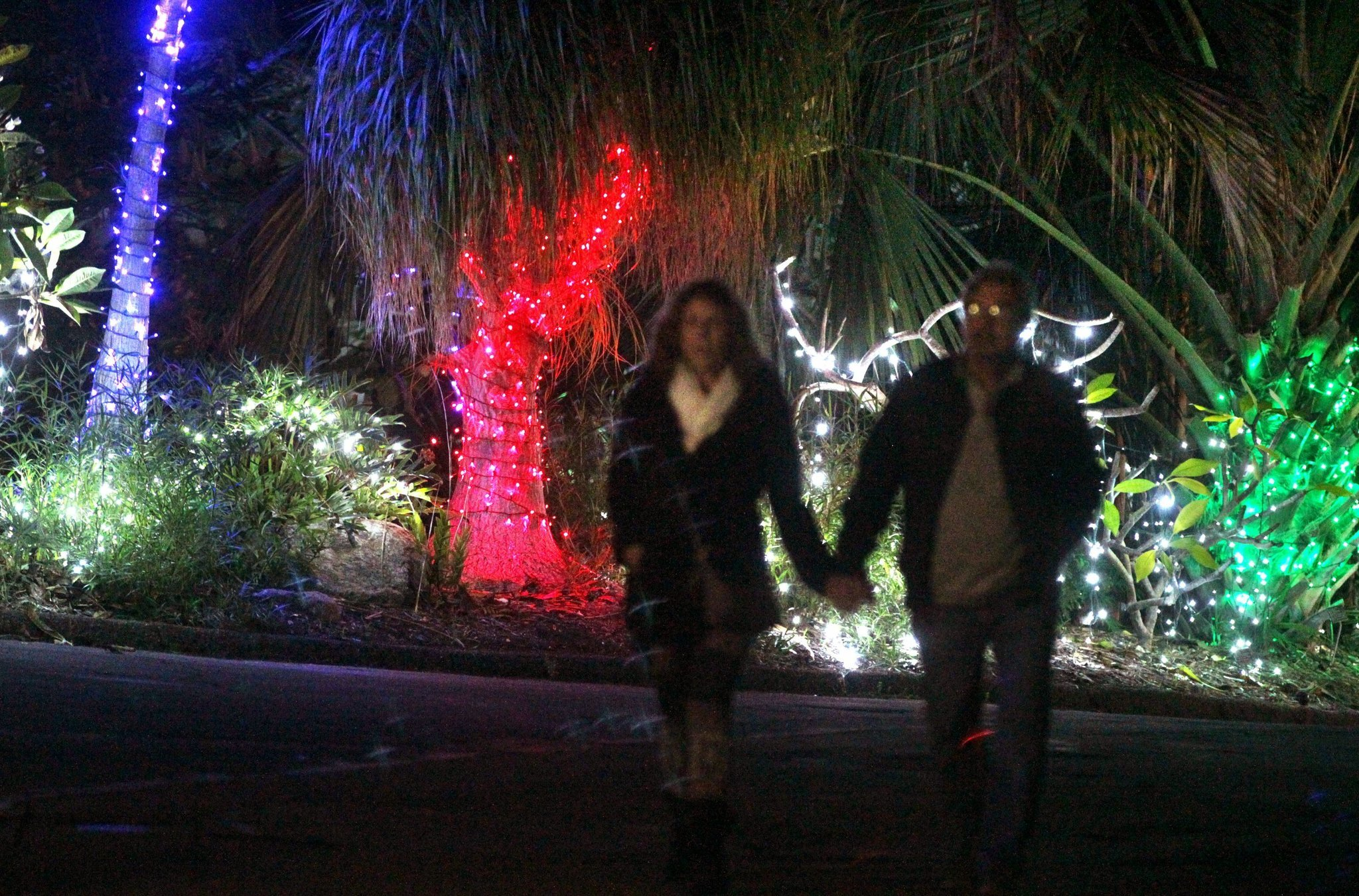 Garden of Lights in Encinitas The San Diego UnionTribune