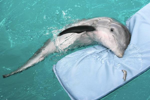К чему сниться спасение дельфинов