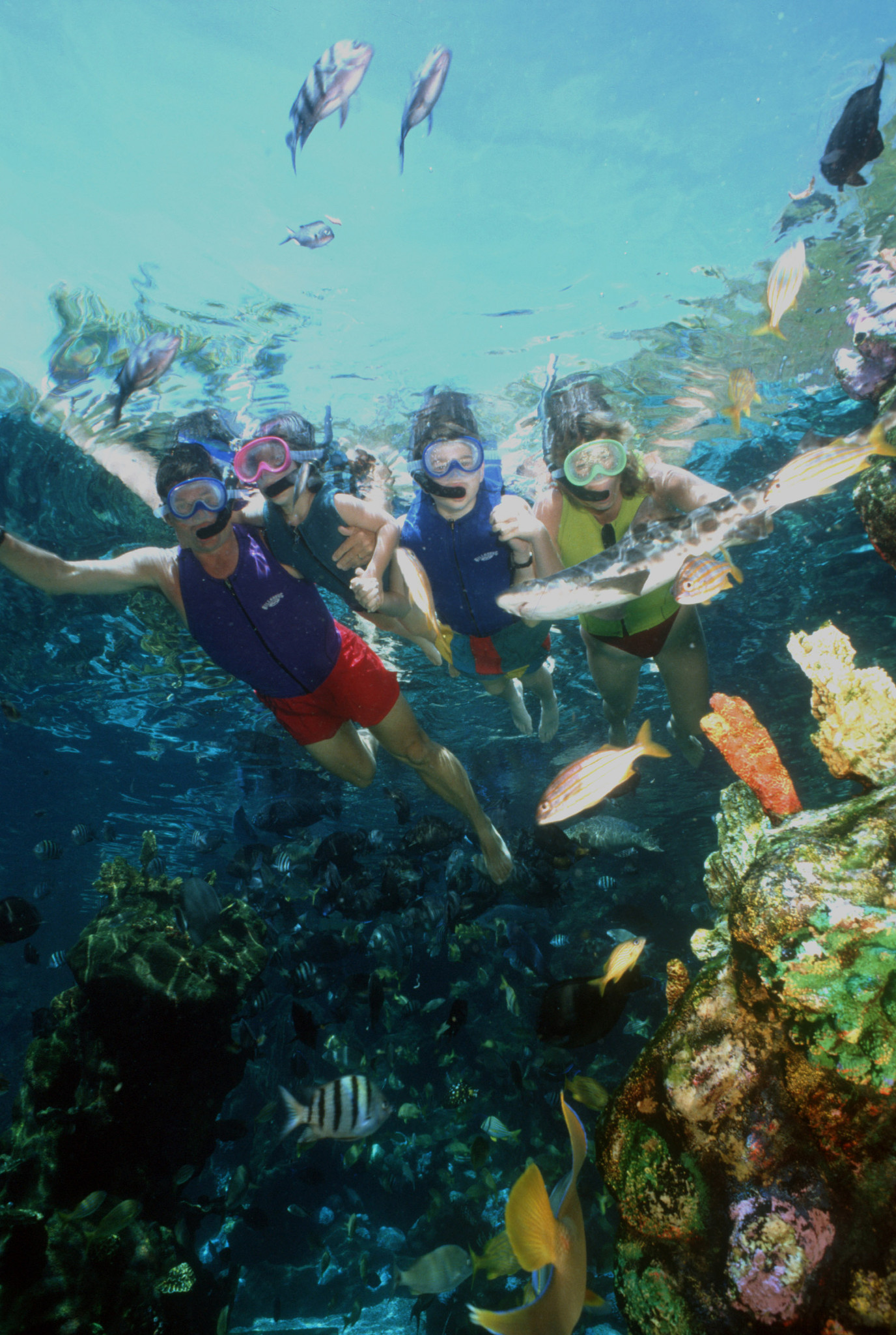 shark reef closing at typhoon lagoon orlando sentinel