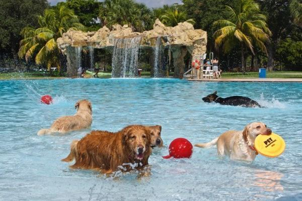 South Florida Water Parks Open Pools To Dogs