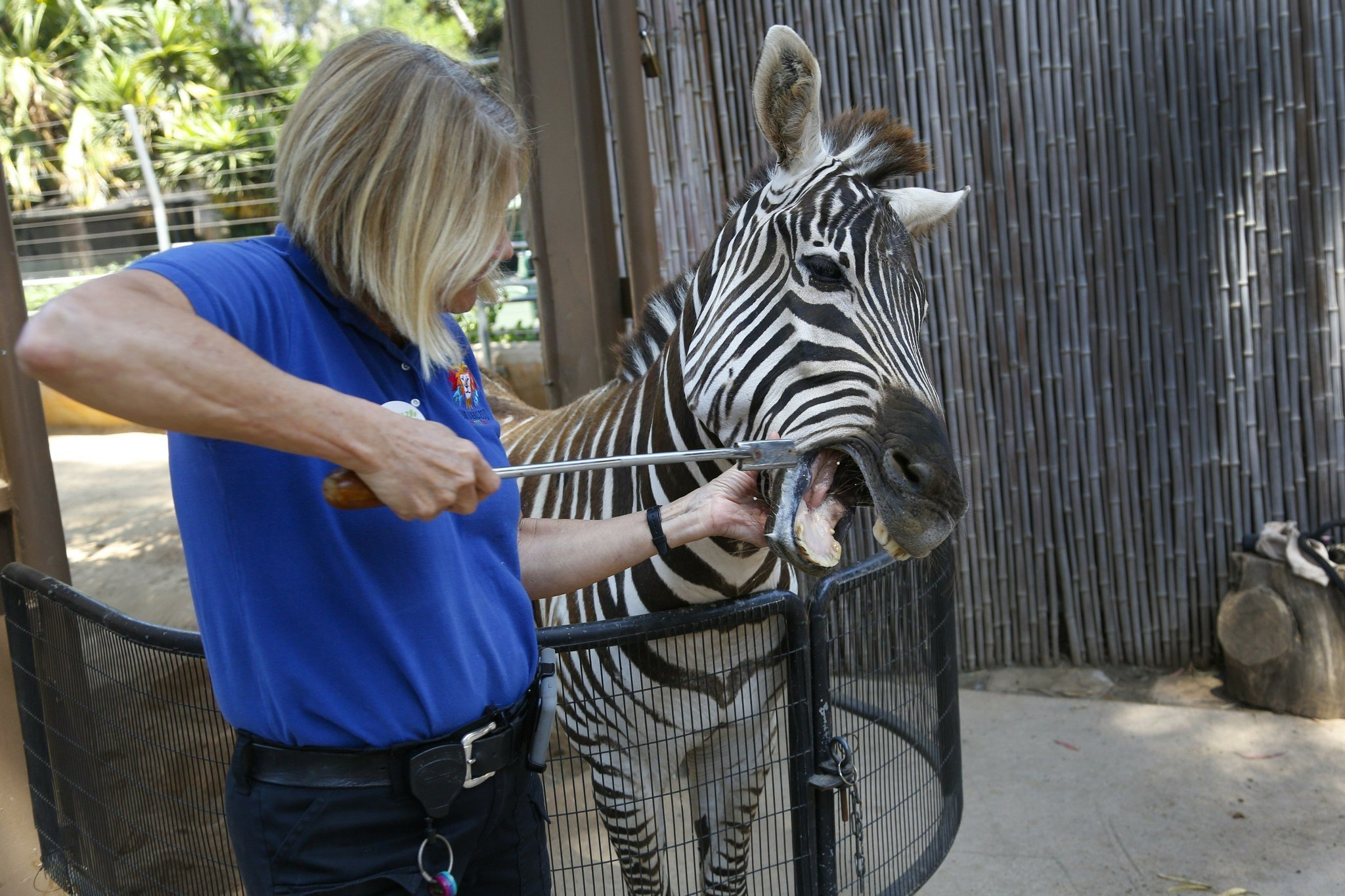 A Behind The Scenes Look At The San Diego Zoo