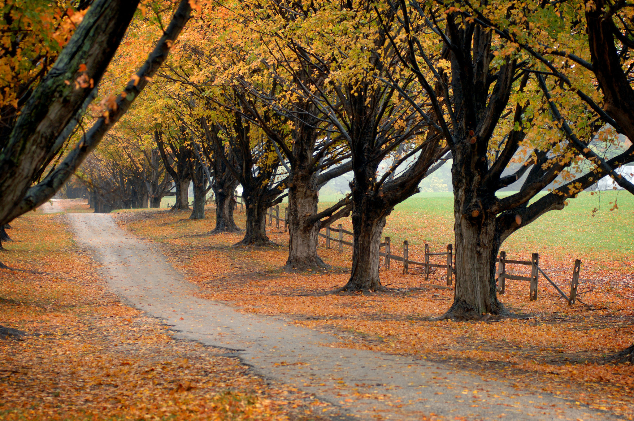 When will fall foliage reach its peak it depends on the weather baltimore sun