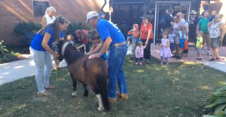 Miniature horse meet and greet at the library carroll county times m4hsunfo