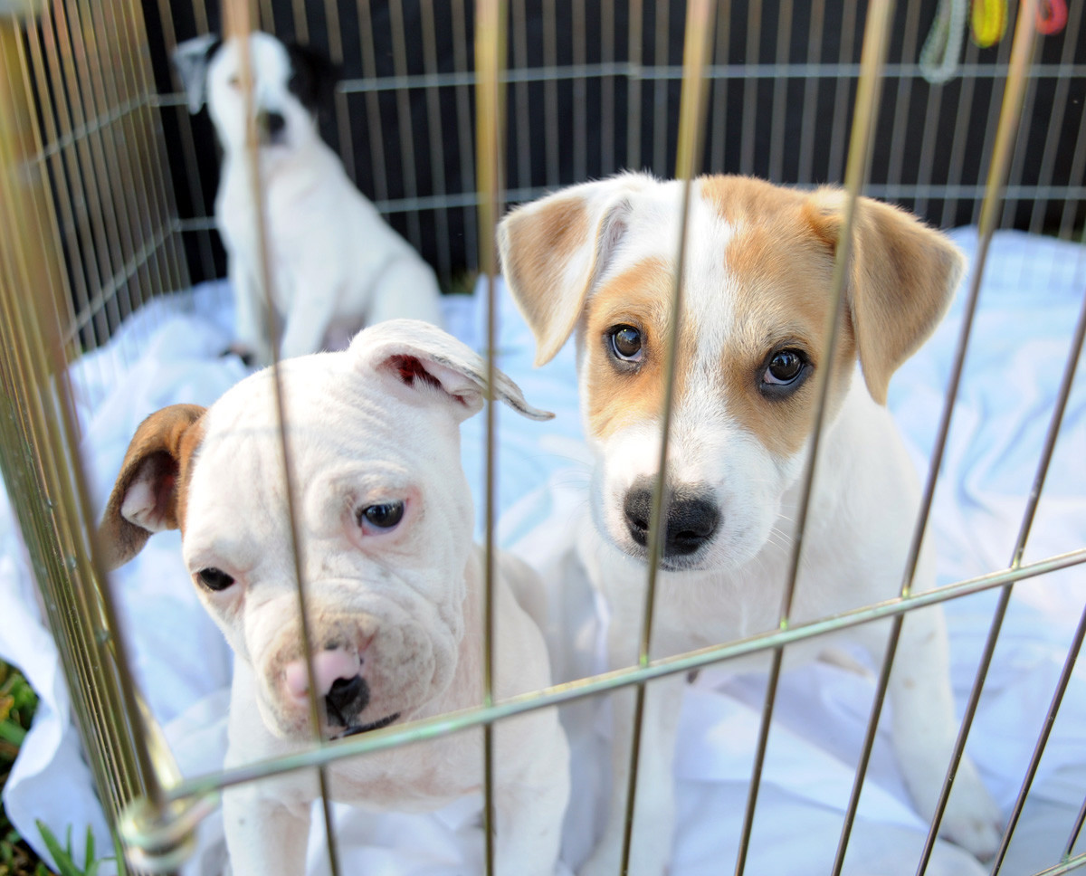 palm beach county bans dog cat sales at new pet stores in. Black Bedroom Furniture Sets. Home Design Ideas