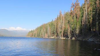 The High Sierra forest is dying, and you can't count the loss in dead trees