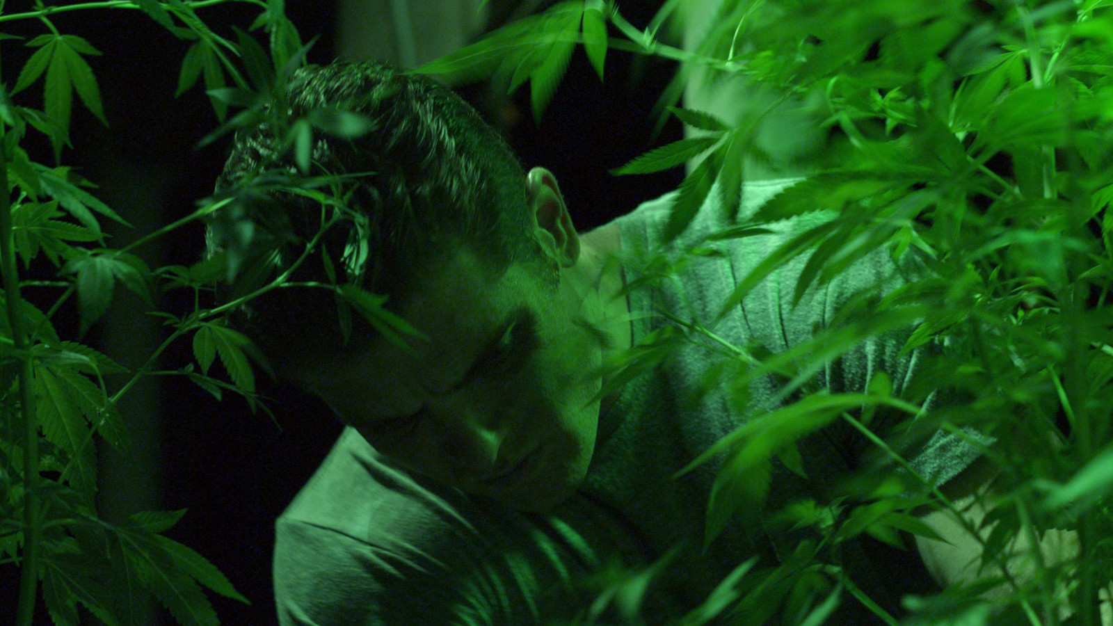 slippery charms of pot growing brothers in green is gold will
