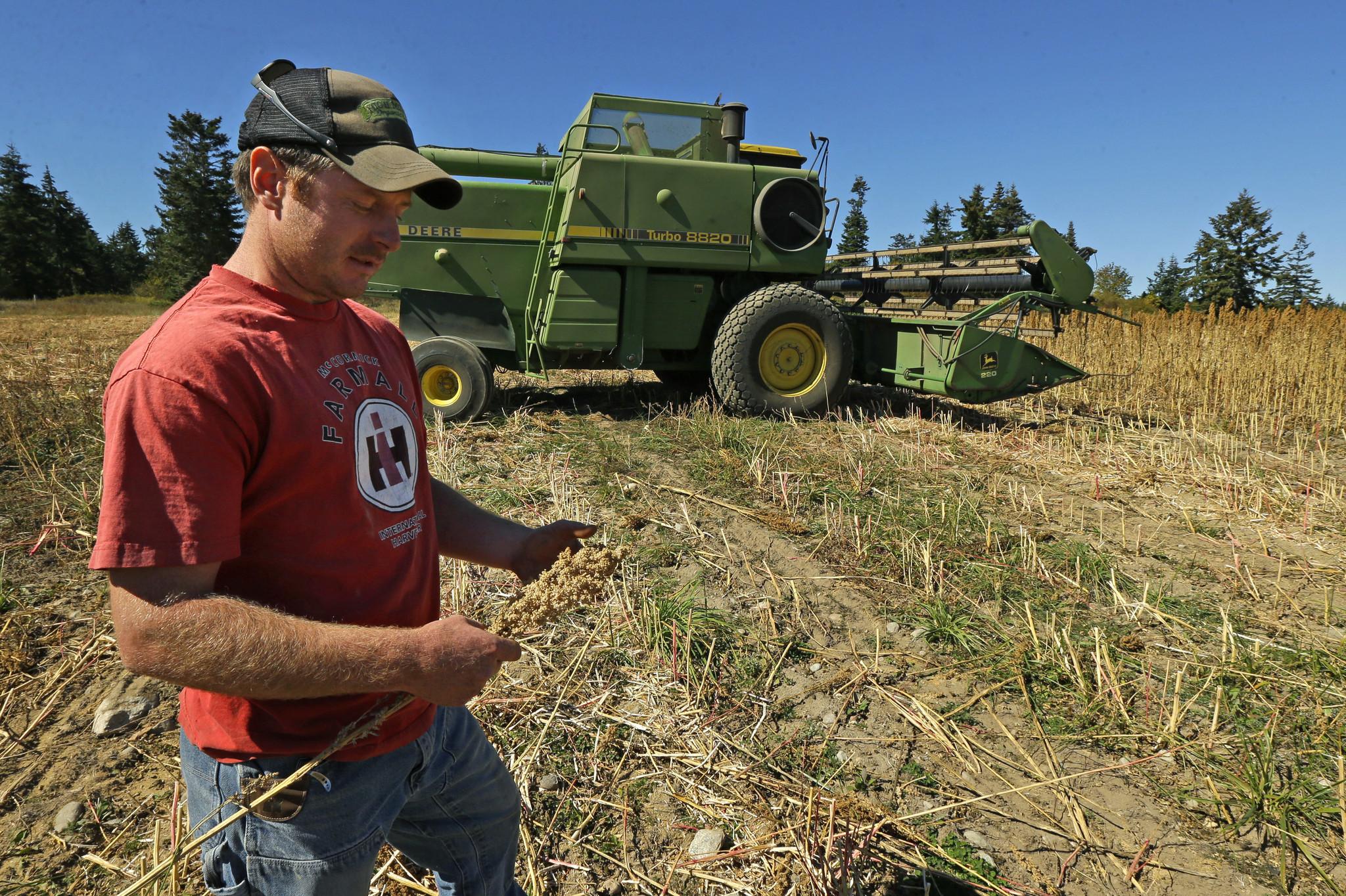 Estadounidenses empiezan a cultivar quinua - El Sentinel