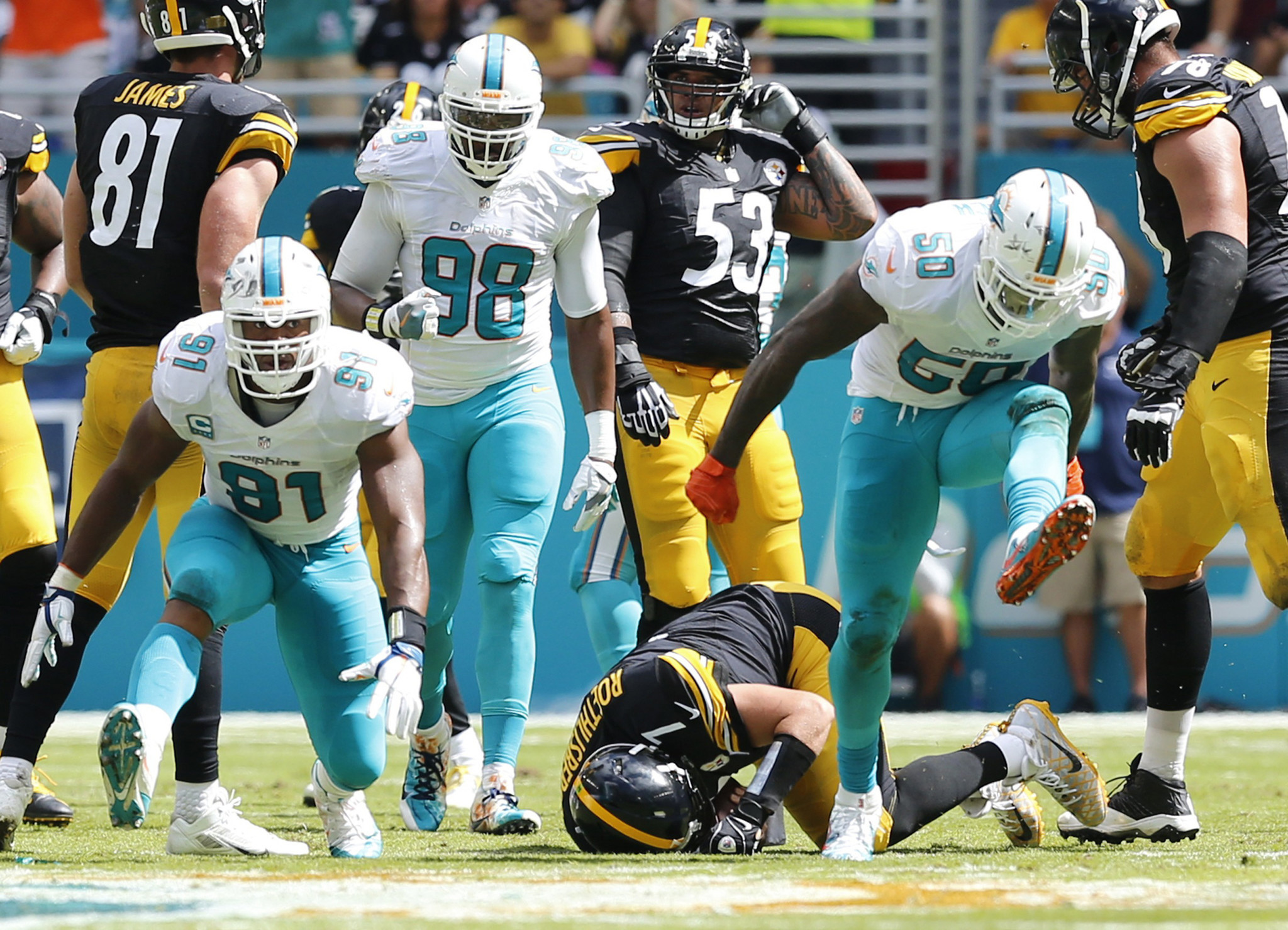 Fl-dolphins-notes-1017-20161016
