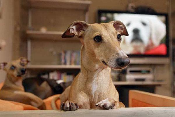 California will start regulating pet boarding facilities for Dog boarding los angeles