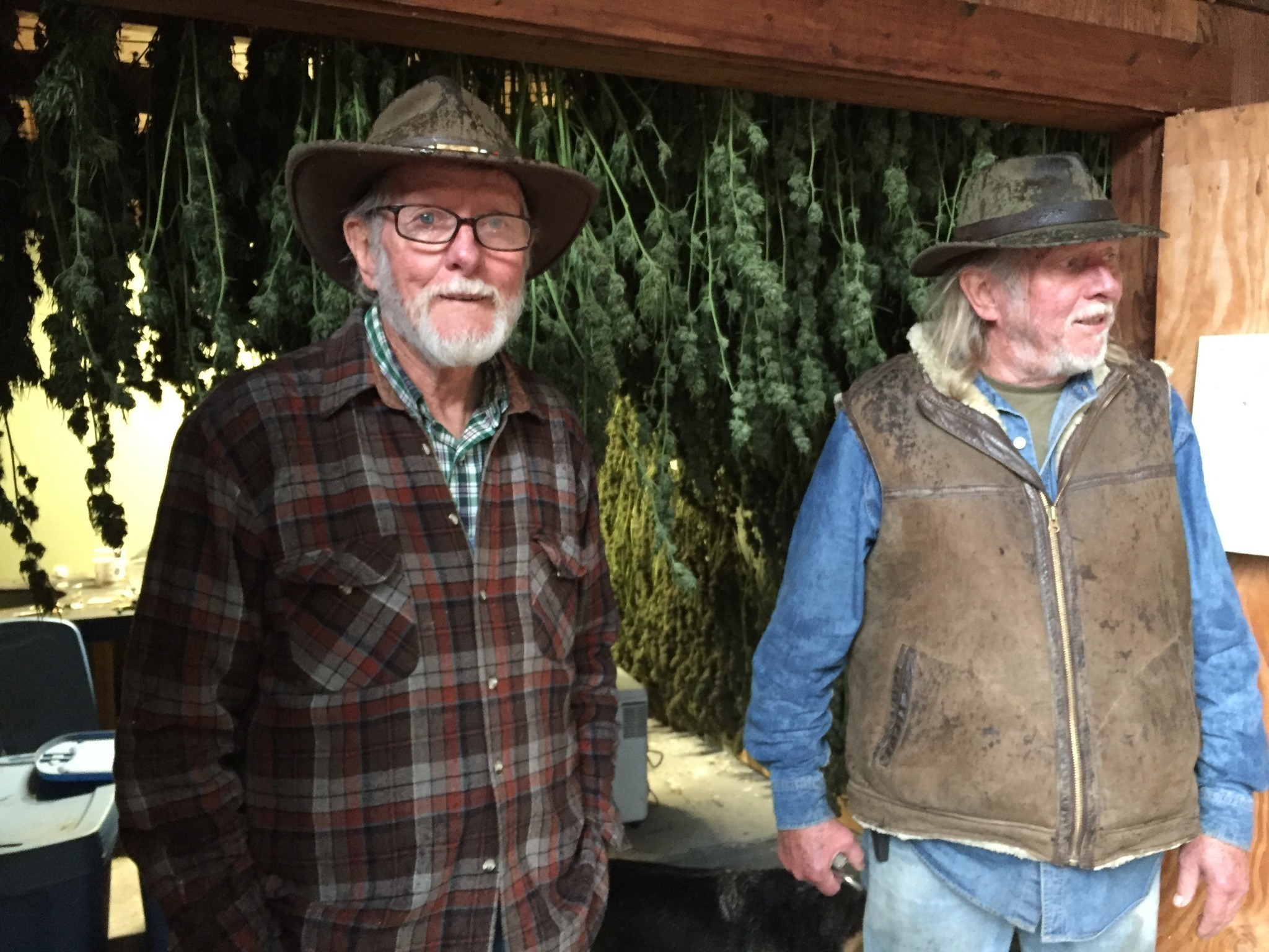 These 76-year-old twins have grown pot for decades. Here's why ...