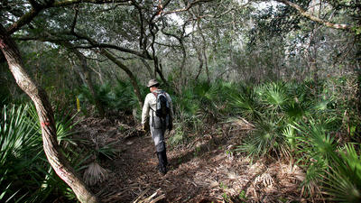 Florida's national hiking trail is at crossroads